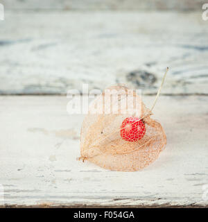 dried Physalis alkekengi showing the red fruit inside - Stock Photo