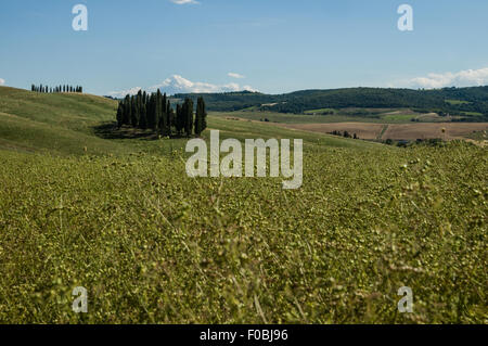 Lonely tree in Val d'orcia landscape, Tuscany - Stock Photo