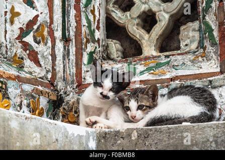 2 pets on a window, Tunisia - Stock Photo