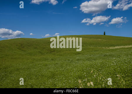 Lonely tree in Val d'orcia, Tuscany - Stock Photo