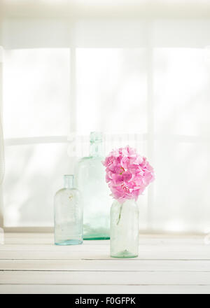 a single pink hydrangea flower head and three vintage glass bottles on a window sill bathed in sunlight - Stock Photo
