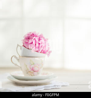 a single pink hydrangea flower head in a vintage tea cup - Stock Photo