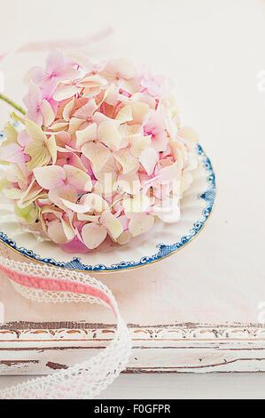 hydrangea Summer pink flowers vintage lace ribbon - Stock Photo