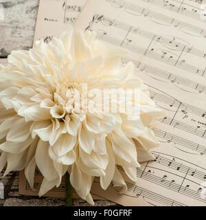 ivory dahlia on vintage music paper - Stock Photo