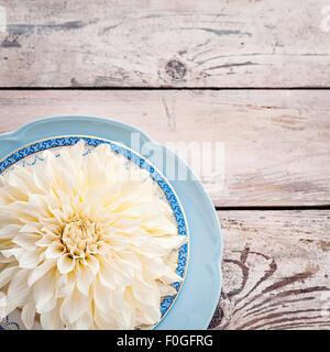 ivory dahlia on vintage plates - Stock Photo