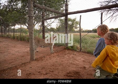 Boys looking at leopard, Harnas Wildlife Foundation, Namibia - Stock Photo