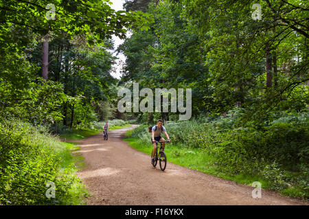 Cyclists on a trail through Thetford Forest, Norfolk, England, UK - Stock Photo