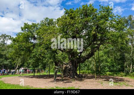 The famous Major Oak, Sherwood Forest Country Park, near Edwinstowe Nottinghamshire, England, UK - Stock Photo