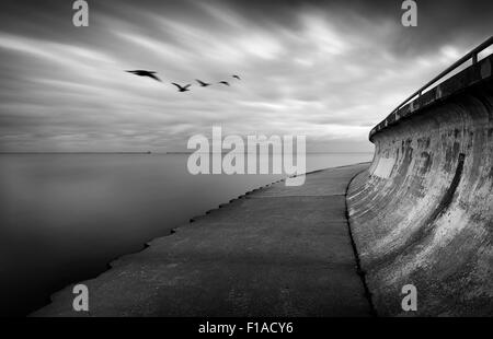 Geese With Blurry Clouds & Water - Stockfoto