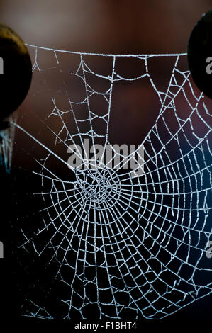 Spider's web covered by ice crystals from frozen dew.  Backlit in the early morning glowing against a dark background. - Stock Photo