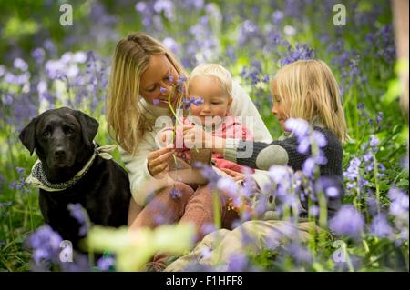 Mother sitting with children and dog in bluebell forest - Stock Photo