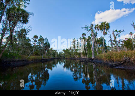 Looking up the Waccasassa River with its expansive emptiness, mud banks and palm trees reflected in the calm water - Stock Photo