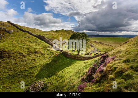 Sycamore Gap on Hadrian's Wall in one of the dramatic landscapes in Northumberland National Park - Stock Photo