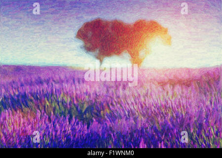 Original oil painting of lavender fields on cardboard. Sunset landscape.Modern Impressionism - Stock Photo