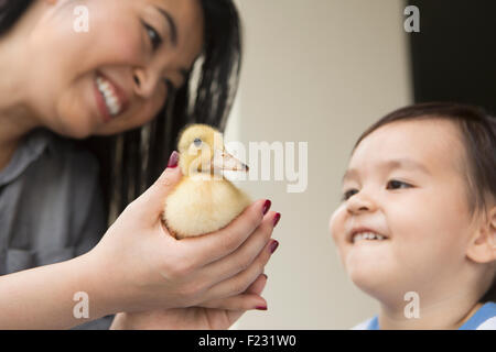 Smiling woman holding a yellow duckling in her hands, her young son watching. - Stock Photo