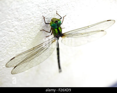 dragonfly on the wall in my house - Stockfoto