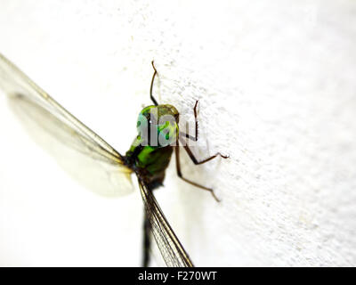 dragonfly on the wall in my house - Stock Photo