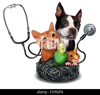 small animal health and care