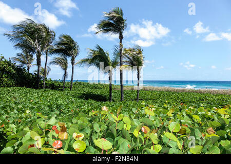 Florida Fl South Delray Beach The Boys Farmers Market Grocery Store Stock Photo 87748822 Alamy