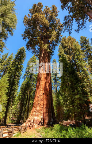sequoia national park buddhist personals 20102017  national park service logo national park service  exploring sequoia groves   national parks california park home.