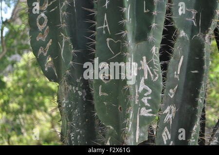 Love on a cactus - Stock Photo