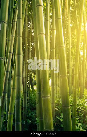 Sunlight in bamboo forest - Stockfoto