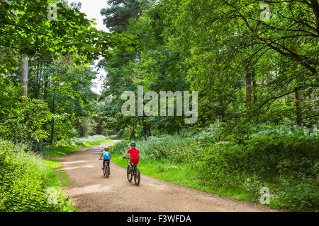Children cycling through Thetford Forest, Norfolk, England, UK - Stock Photo