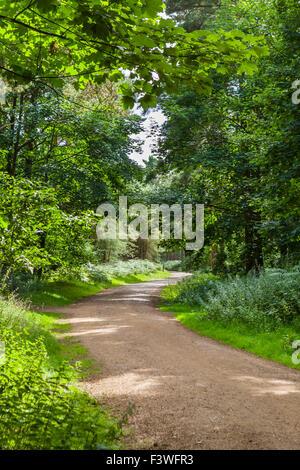 Trail through Thetford Forest, Norfolk, England, UK - Stock Photo