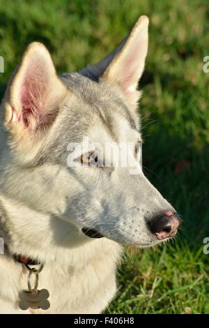 Dog Breeders In Brighton Ontario