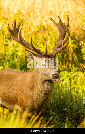 young stag in the woods - Stock Photo
