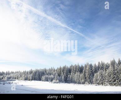Winter wonderland forest - Stockfoto