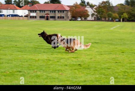 Dog Training Dundee Scotland