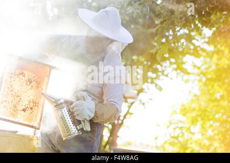 Beekeeper using smoker to calm bees - Stock Photo