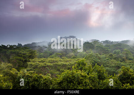 Colorful skies and mist at sunrise in the rain forest of Soberania national park, Republic of Panama. - Stock Photo