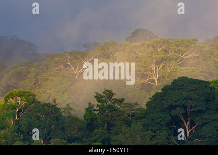 First light and mist in the rain forest of Soberania national park, Republic of Panama. - Stock Photo
