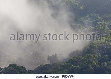 Mist at sunrise in the rain forest of Soberania national park, Republic of Panama. - Stock Photo