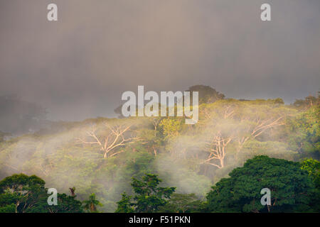 First light and mist at in the rain forest of Soberania national park, Republic of Panama. - Stock Photo