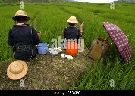 Some Hmong women eating next to a rice field in Sapa way to the nearby villages of Lao Chai and Ta Van. Vietnam. - Stock Photo