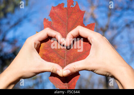 Heart shape made of girl hands over autumn leaf. Loving fall - Stock Photo