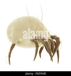medically accurate illustration of a common dust mite - Stock Photo