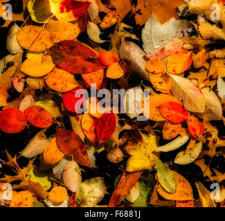 Random pattern of colorful autumn leaves floating in a pool of water. Black background. Airbrush filter effect applied. - Stock Photo