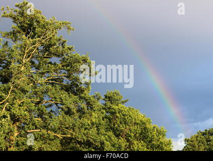 Natural Rainbow on Dark Blue Sky above Green Bright Forest - Stock Photo