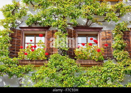Windows with flowers, Hallstatt, Salzkammergut, Austria - Stock Photo
