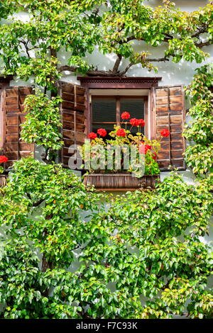 Window with red flowers, Hallstatt, Salzkammergut, Austria - Stock Photo