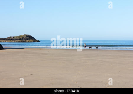 A man walks his dogs on Newborough Beach, Anglesey,Wales - Stock Photo