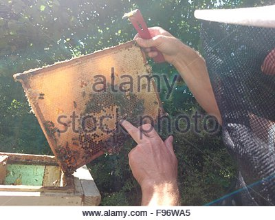Beekeeper Holding Bees And Honeycomb - Stock Photo