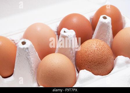 Seven eggs in a white paper container - Stockfoto