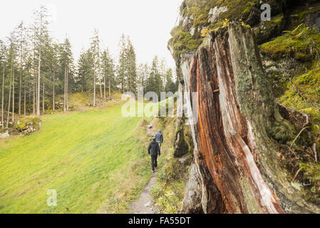Two mature hikers walking in forest, Austrian Alps, Carinthia,  Austria - Stock Photo