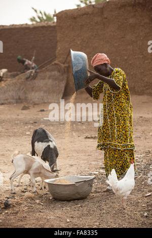 A woman winnows grain in Niassan village, Burkina Faso. - Stock Photo