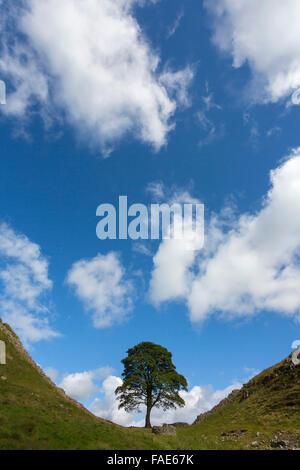 Sycamore gap, Hadrian's Wall, Northumberland, UK - Stock Photo